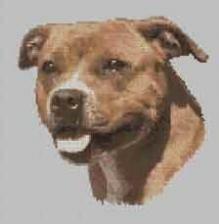 Borduurpakket : Staffordshire Bull Terrier