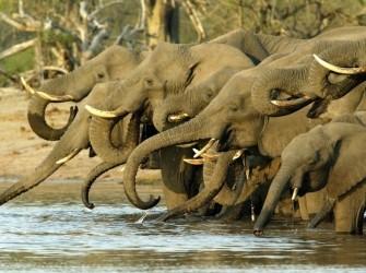 Safari reizen in Afrika