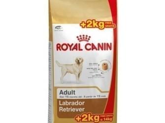 Royal Canin Labrador Retriever Adult 12 +2 kg gratis