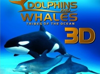 Dolphins and whales 3D - Tribes of the ocean