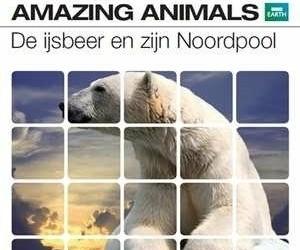 BBC Earth - Amazing Animals: De IJsbeer