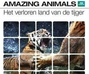 BBC Earth - Amazing Animals: De Tijger