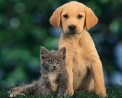 Is uw geliefde huisdier zoek?