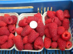 Frambozen rood (zomer) met super grote vruchten!
