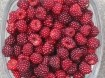 Wijnbessen, heerlijke kleine sappige rode vruchten