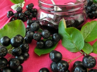 Appelbessen Aronia bessen meest gezonde vrucht