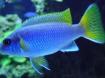 Elke zondag geopend vele soorten tropische vissen