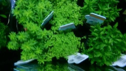 Iedere zondag geopend aquarium planten