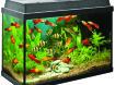 Iedere zondag geopend aquariums in diverse maten op voorraa…