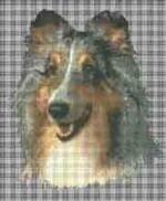 Borduurpakket : Shetland Sheepdog (sheltie)