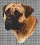 Borduurpakket : Bullmastiff