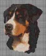 Borduurpakket : Zwitserse Sennenhond