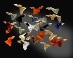 Elke zondag geopend vele tropische vissen op voorraad