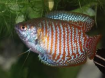 Vele soorten tropische vissen op voorraad.