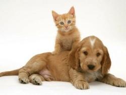 huisdierverzorging aan huis,
