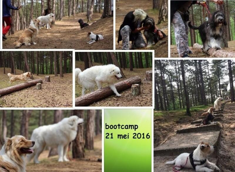 Honden bootcamp training Clinidogs