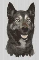 Borduurpakket : Siberian Husky