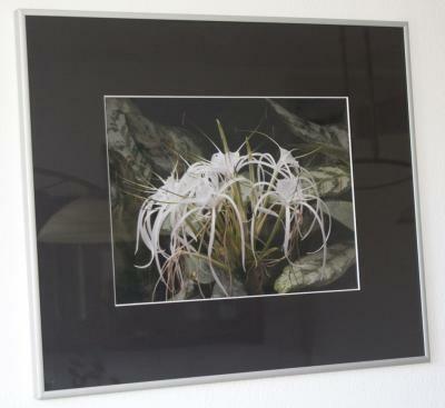 Aluminium fotolijst 50 x 60 cm