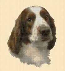 Borduurpakket : Welsh Springer Spaniel