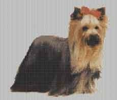 Borduurpakket : Yorkshire Terrier