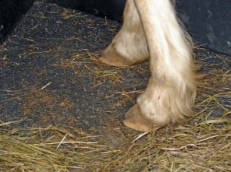 Rubber gietvloeren als trailervloer of stalvloer