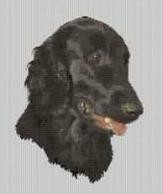 Borduurpakket : Flat Coated Retriever