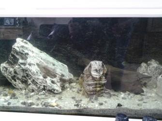 TeKoop aangeboden; Aquarium met Malavi Ciclides