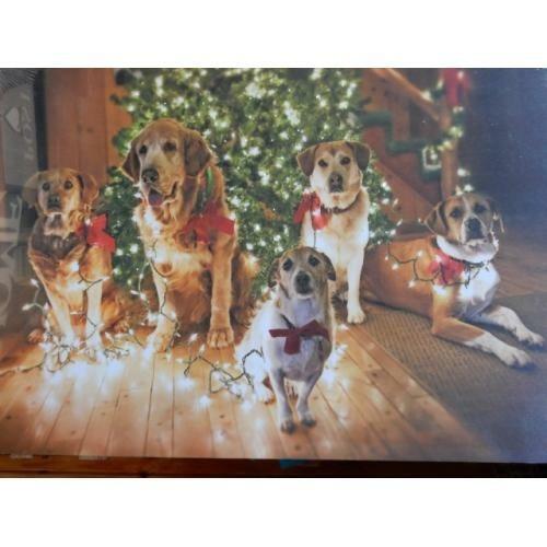 kerstfoto honden met verlichting