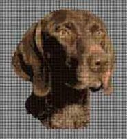 borduurpakket : Duitse Staande Hond