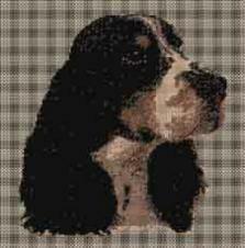 borduurpakket : Engelse Springer Spaniel