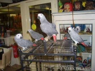 gratis kooi bij aankoop papegaai