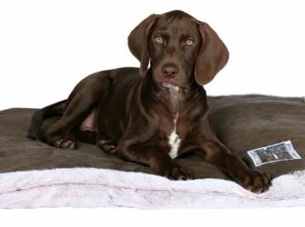 HONDENKUSSEN best of all breeds 120x80cm suede-loo