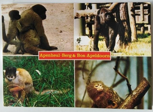 Ansichtkaart - Apenheul - Berg&Bos - Apeldoorn -1988