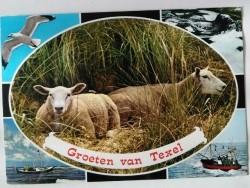 Ansichtkaart - Groeten van Texel - 1982