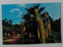 Ansichtkaart - Blanes Costa Brava - No. 110 - 1976