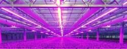 750W DUO LED power groeistrip 25 meter assimilatie en stuur…