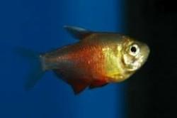 Oranje Rio