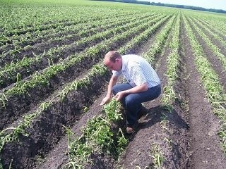Taxatie landbouwgewassen, AgriPlaza Makelaars