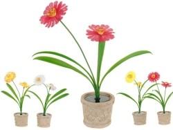 2 Solarbloemen in pot  Alleen deze week 10% extra korting