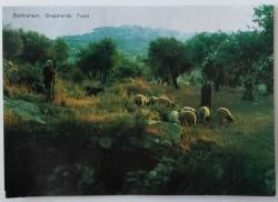 Ansichtkaart - Bethlehem, Shepherd's Field - 1980