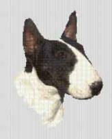 Borduurpakket : Bull Terrier