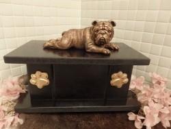 Engelse Bulldog op urn