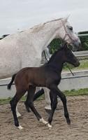 weide voor paarden gezocht westland