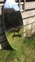 Te koop: ovale spiegel 140 hoog