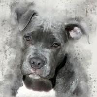 diamond painting pitbull puppy 40 x 30 cm 266 gr