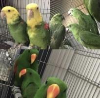 Papegaaien va €150