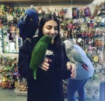 jonge baby kaketoes, aras, parkieten en papegaaien