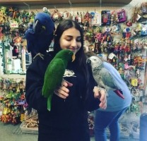 Van parkiet tot ara, alle soorten papegaaien