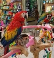 gratis klimboom bij aankoop ara, papegaai, kaketoe