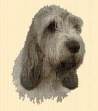 Borduurpakket : Grand Basset Griffon Vendeen